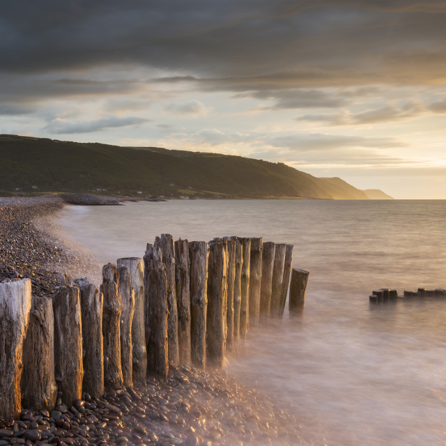 """""""Weathered wooden posts on Bossington Beach, Exmoor National Park, Somerset,..."""" stock image"""