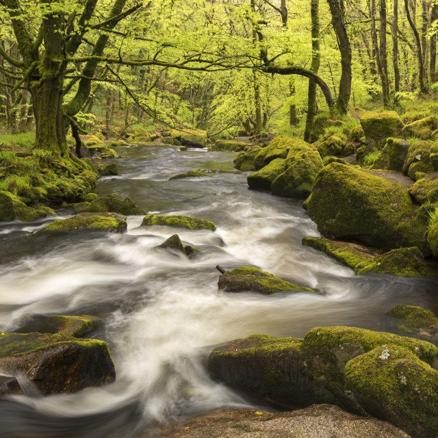 """""""The River Fowey flowing through Golitha Falls, Bodmin Moor, Cornwall,..."""" stock image"""