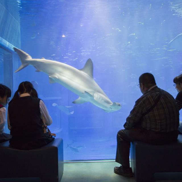 """People watching shark at Osaka Aquarium, Tempozan, Osaka, Kansai, Japan, Asia"" stock image"
