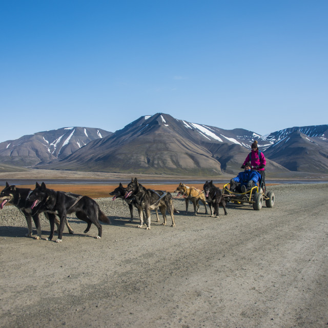 """Husky dog sledding on wheels, Svalbard, Longyearbyen, Norway, Scandinavia,..."" stock image"