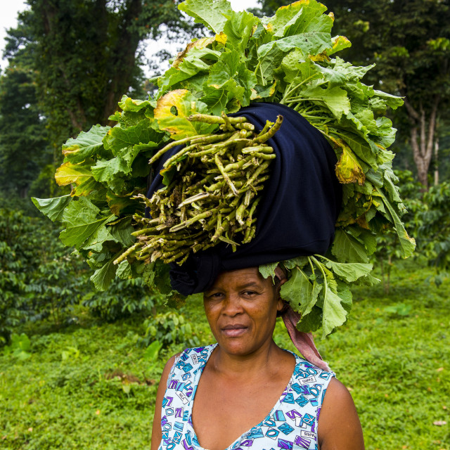 """Woman carries a huge stack of vegetables on her head, Sao Tome, Sao Tome and..."" stock image"