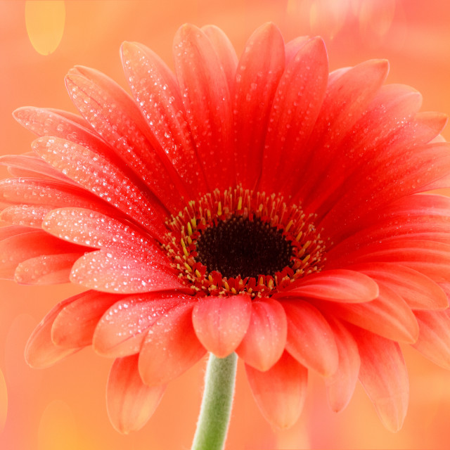 """Orange Flowers"" stock image"