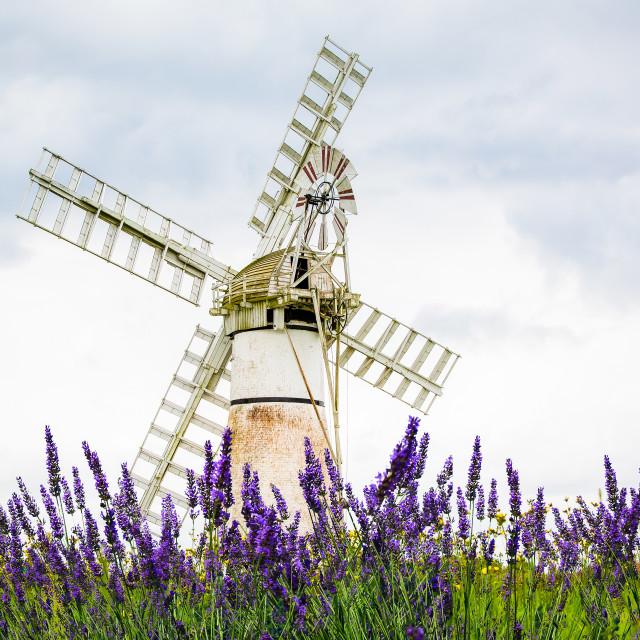 """Old English Windmill, Norfolk"" stock image"