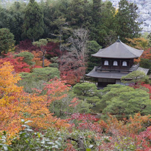 """""""The Silver Pavilion and gardens in autumn, Buddhist Temple of Ginkaku-ji,..."""" stock image"""