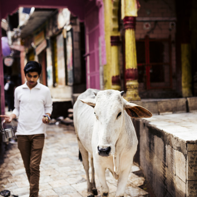 """Mathura, Uttar Pradesh, India, Asia"" stock image"