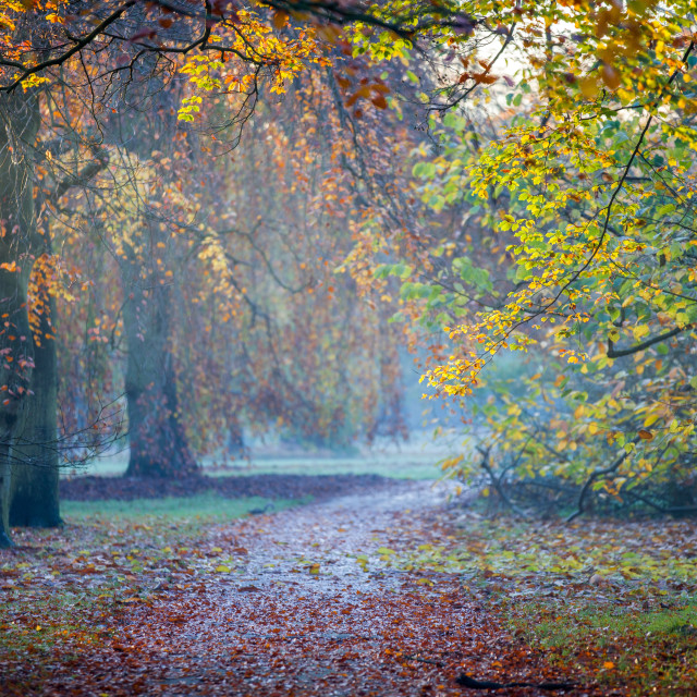 """Autumn in Kew Gardens, UNESCO World Heritage Site, Kew, Greater London,..."" stock image"