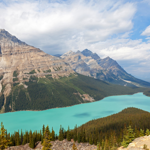 """Peyto Lake is a glacier-fed lake located in Banff National Park"" stock image"