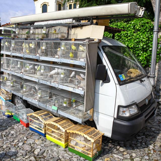 """""""A mobile market seller selling caged birds bird Lenno Market, La"""" stock image"""