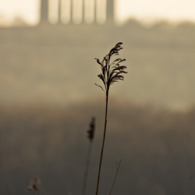 """Penshaw Monument and Grass"" stock image"