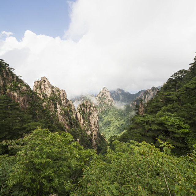"""""""Granite Peaks With Pine Trees In The North Sea Scenic Area, Mount Huangshan,..."""" stock image"""