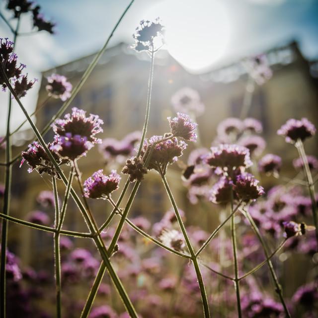 """Sunlit Garden"" stock image"