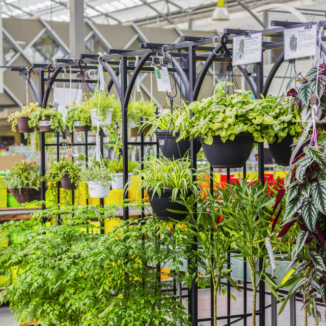 """Plants For Sale In A Nursery Located In A Shopping Complex; St. Albert,..."" stock image"
