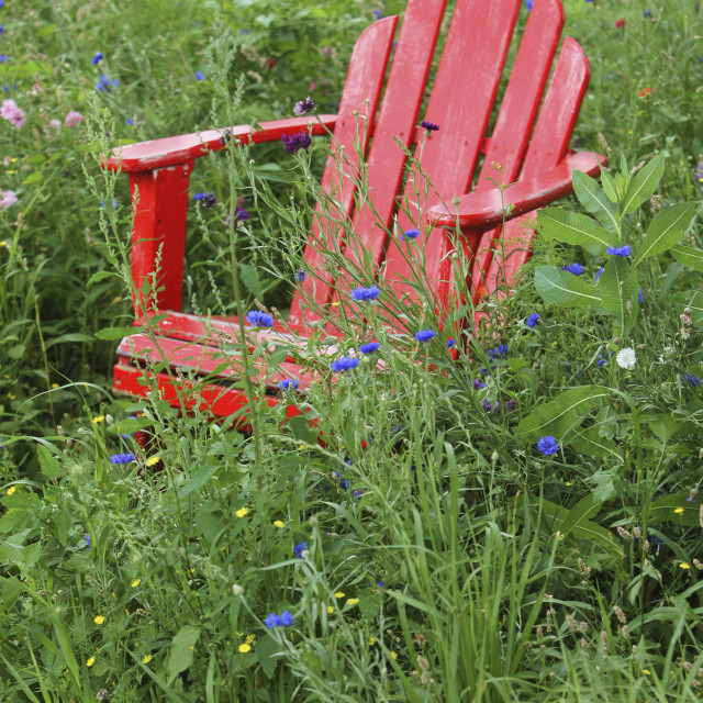 """""""Red Adirondack Chair In The Tall Grass With Wildflowers; Troutdale, Oregon,..."""" stock image"""