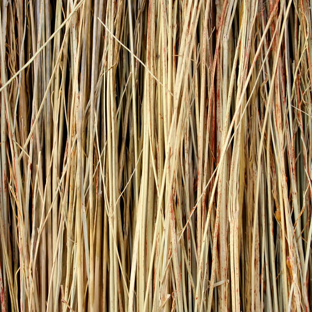 """Straw Texture"" stock image"