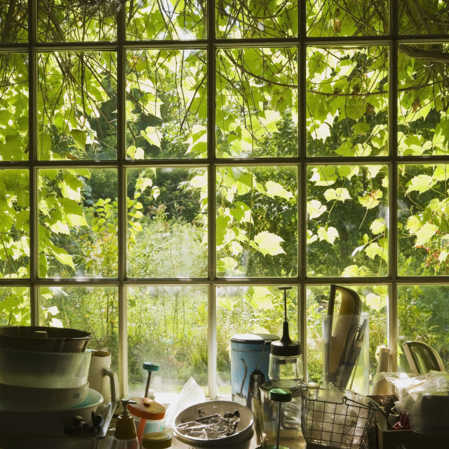 """""""View Of Vines Through A Large Old Glass Pane Window In An Antique Shop;..."""" stock image"""