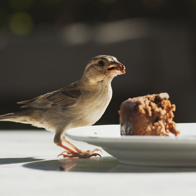 """A Bird Standing On A Table Eating Food Left On A Plate; Tarifa, Cadiz,..."" stock image"