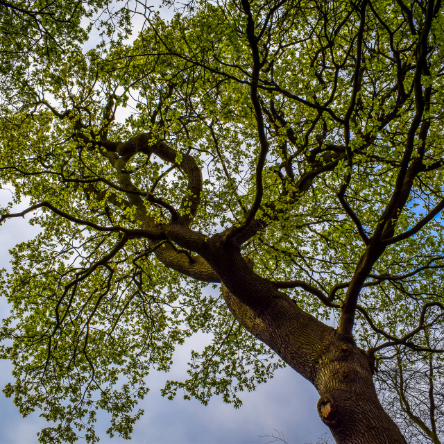 """Tree of Life"" stock image"