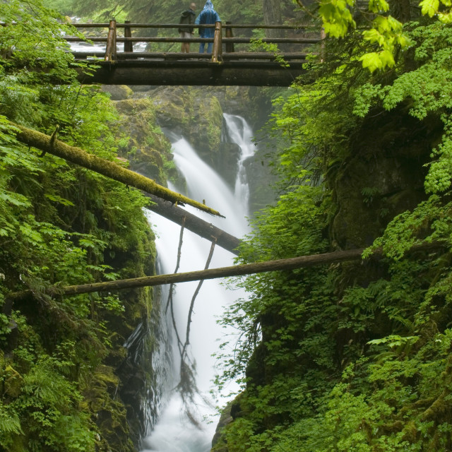 """""""Waterfall Plunges Into A Canyon Below A Foot Bridge In An Old-Growth..."""" stock image"""