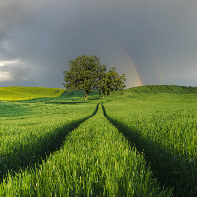 """""""rainbow over a green field"""" stock image"""