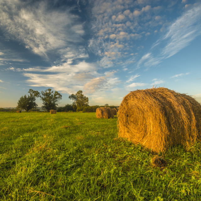 """""""beautiful morning in the meadow, hay bales"""" stock image"""