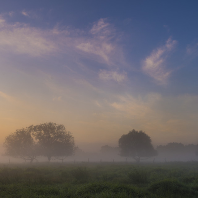 """""""beautiful, foggy morning in the summer meadow, trees and grass c"""" stock image"""