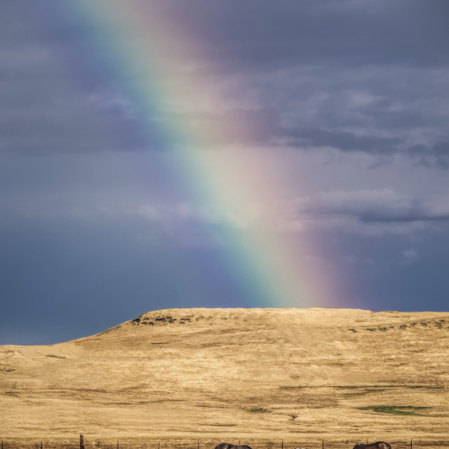"""Horses in a Pasture At The Bottom of a Rainbow"" stock image"