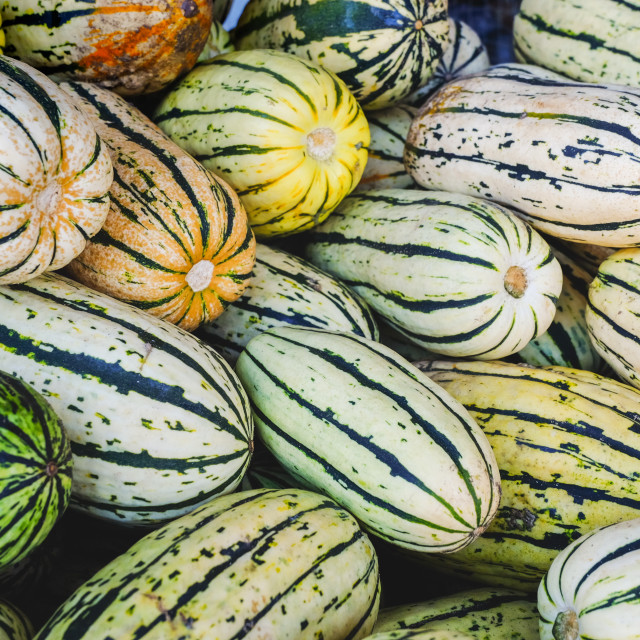 """Squash in a container at fresh market"" stock image"