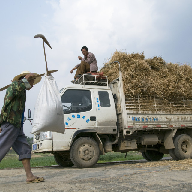 """CHINA Truck loaded with hay during harvest time in Yunnan province."" stock image"