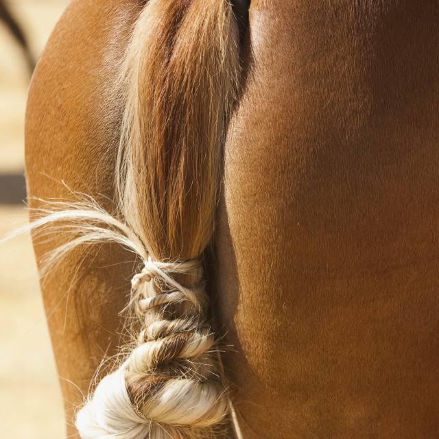 """Traditional Horse Tail Know In Spanish Feria; Tarifa,Cadiz, Andalucia, Spain"" stock image"