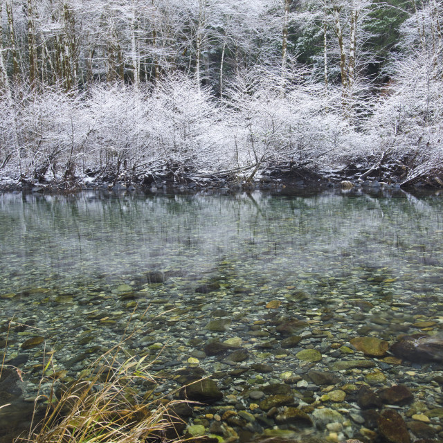 """Snow covered trees lining the smith river during a northern california..."" stock image"
