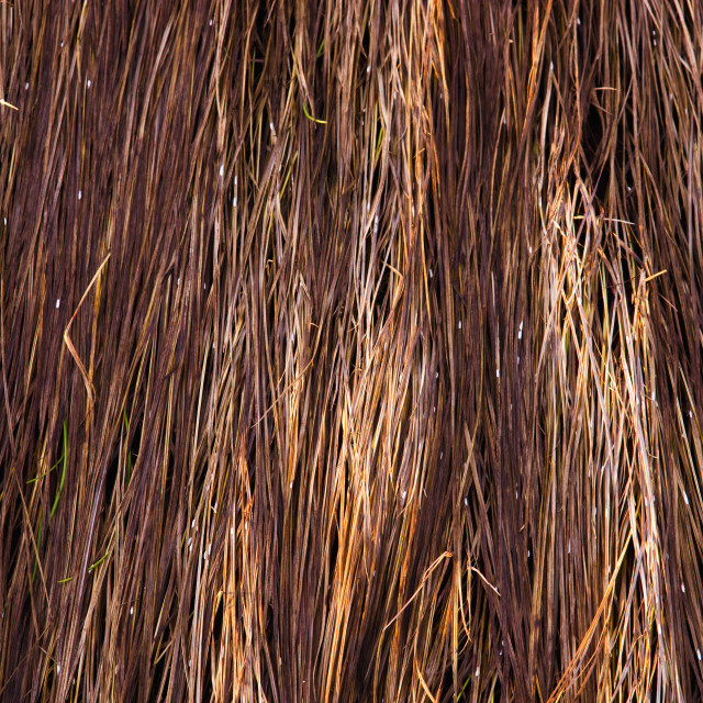 """""""Close Up Of Grass Along The Tony Knowles Coastal Trail At Sunset Light During..."""" stock image"""