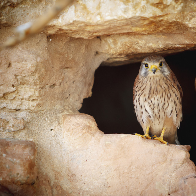 """Bird perched in the opening of a cave;Israel"" stock image"