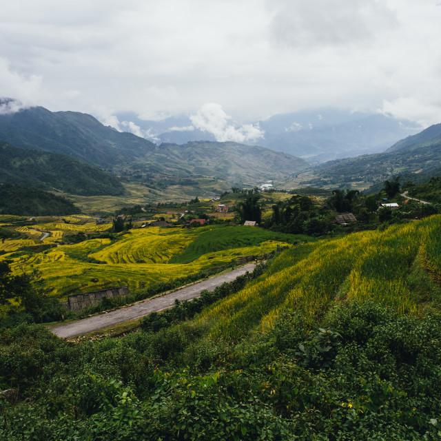 """Terraced rice fields Vietnam"" stock image"