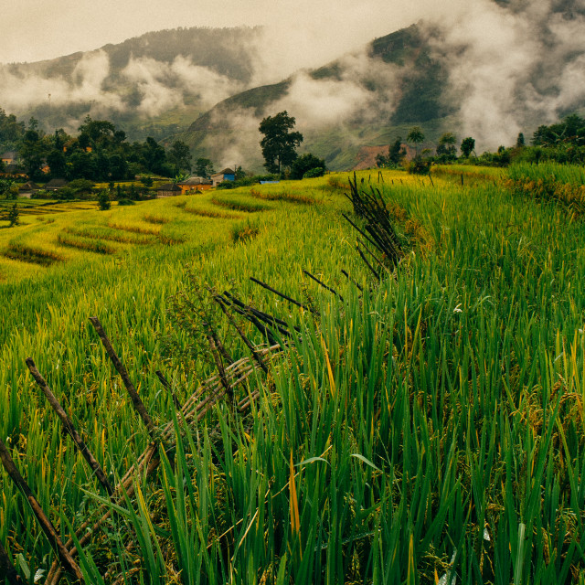 """Terraced rice fields with clouds"" stock image"