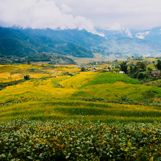 """""""View of Terraced rice field"""" stock image"""