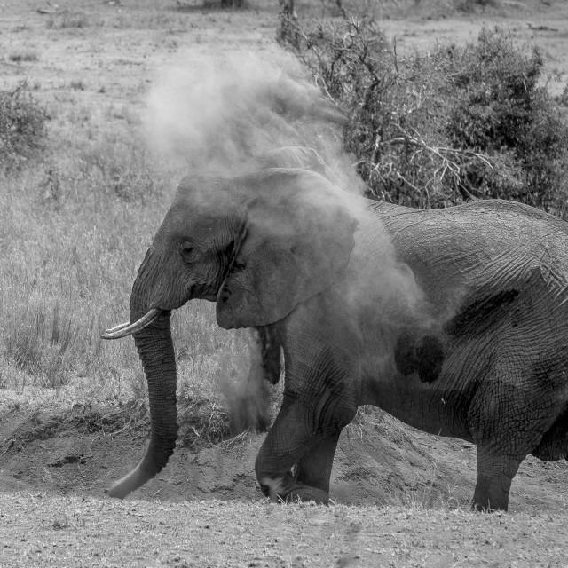 """Elephant dust"" stock image"