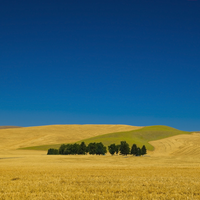 """Cemetery with trees in a wheat field;Washington united states of america"" stock image"
