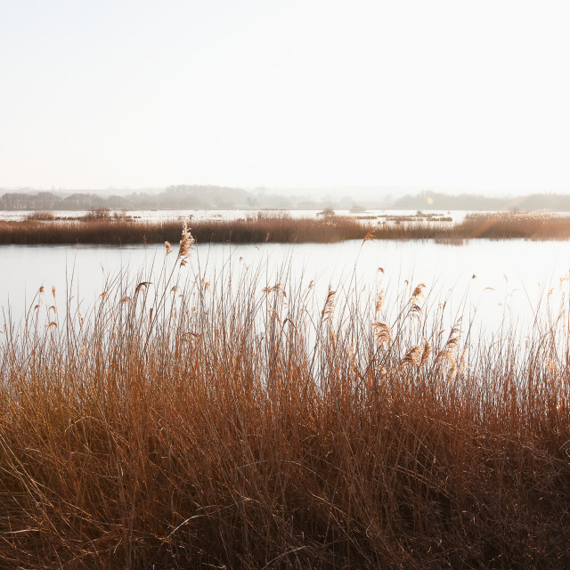 """Sunset at Shapwick Heath a wetland reserve of the Avalon Marshes of the..."" stock image"