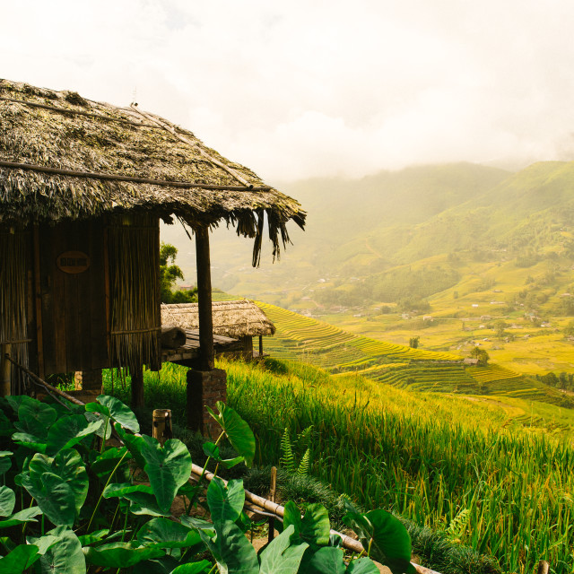 """A small wooden cottage at the terraced rice field."" stock image"