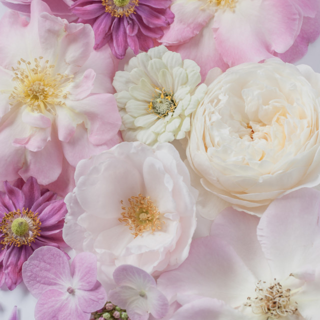 """""""Pale Pink Flowers"""" stock image"""