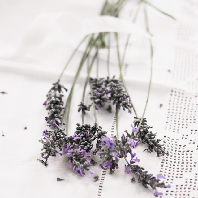 """""""Lavender and Lace"""" stock image"""
