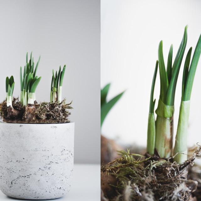 """""""Emergence of Spring"""" stock image"""