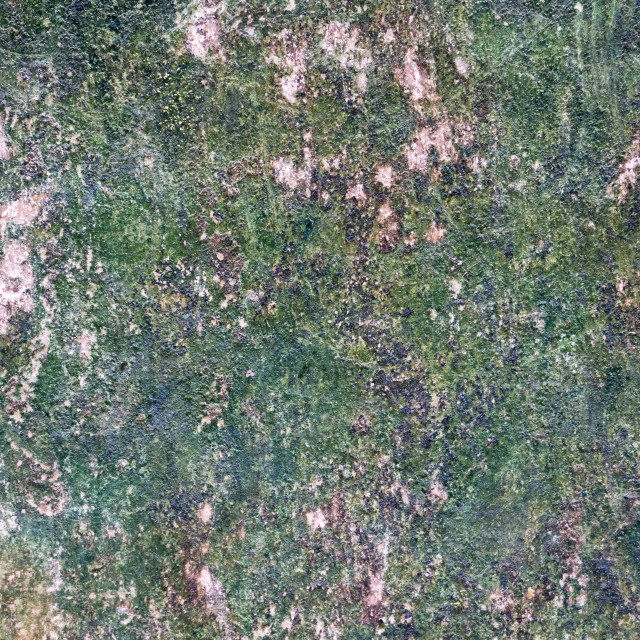 """""""Textures of mossy covered wall concrete"""" stock image"""