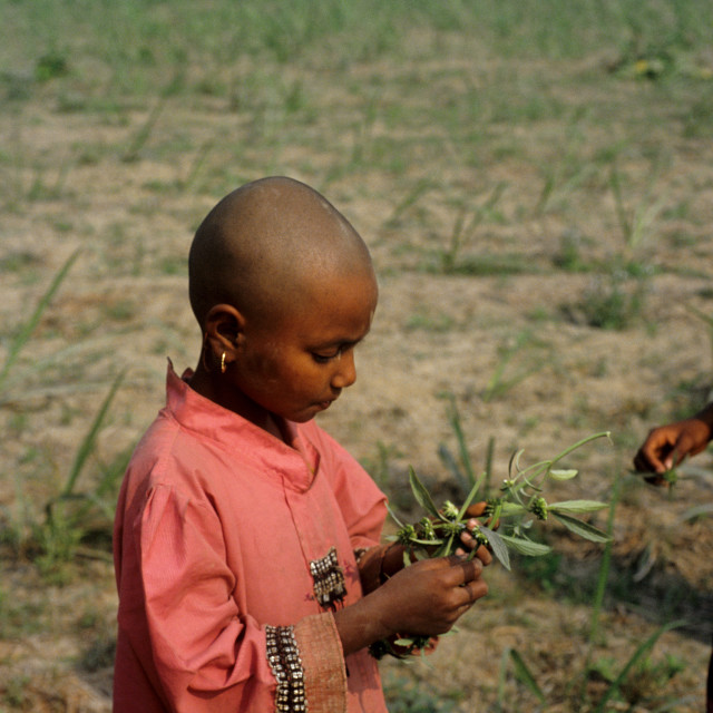 """A child with Dondu Calus - white flower at a Nayakrishi (new agriculture)..."" stock image"