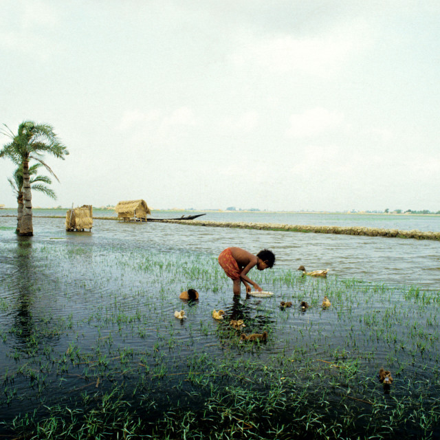 """A rural girl feeding ducks in the waters near a shrimp field locally known as..."" stock image"