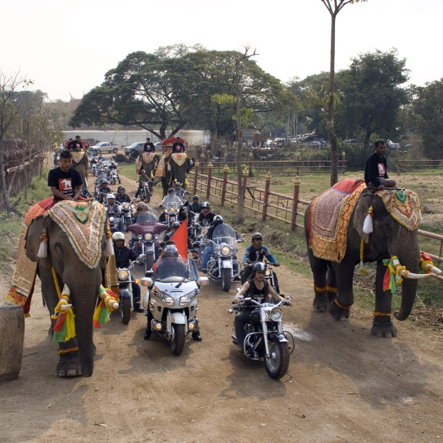 """Harley Davidsons and elephants. Thailand. January 21, 2007."" stock image"