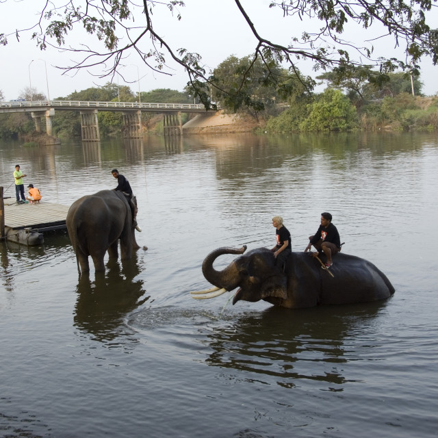 """Elephant; Animal; Wild life; Dust bath; Elephant reserve; Thailand; ASEAN;..."" stock image"