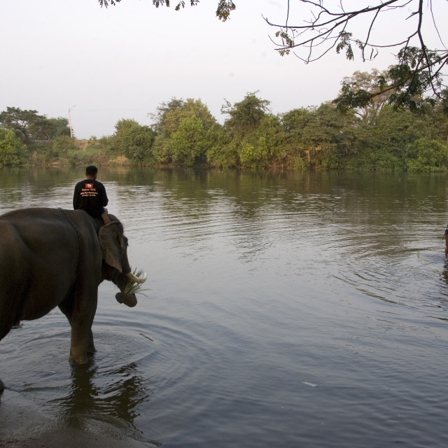 """Mahout takes an elephant in the pond for bathing. Thailand. January 21, 2007."" stock image"