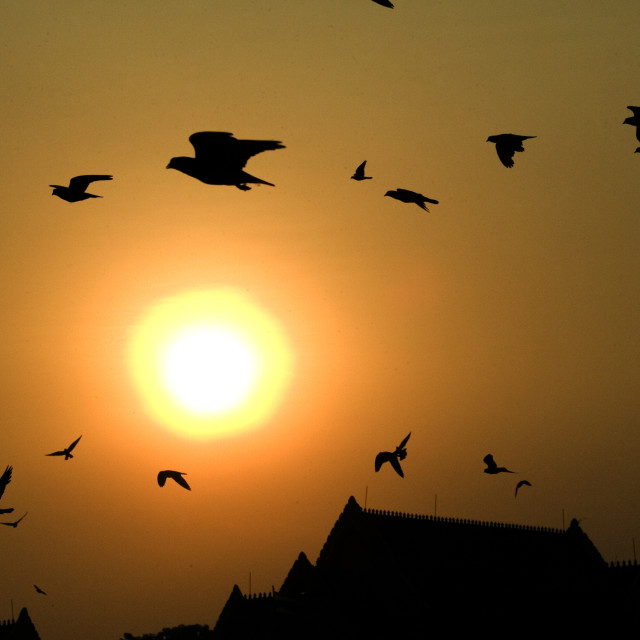 """Pigeons flying at sunset. Thailand, January 16, 2007."" stock image"