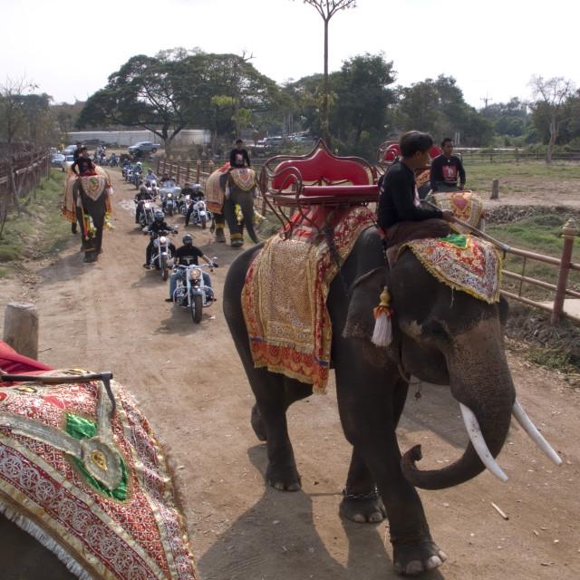 """Elephant convoy leading Harley Davidson convoy. Thailand. January 21, 2007."" stock image"